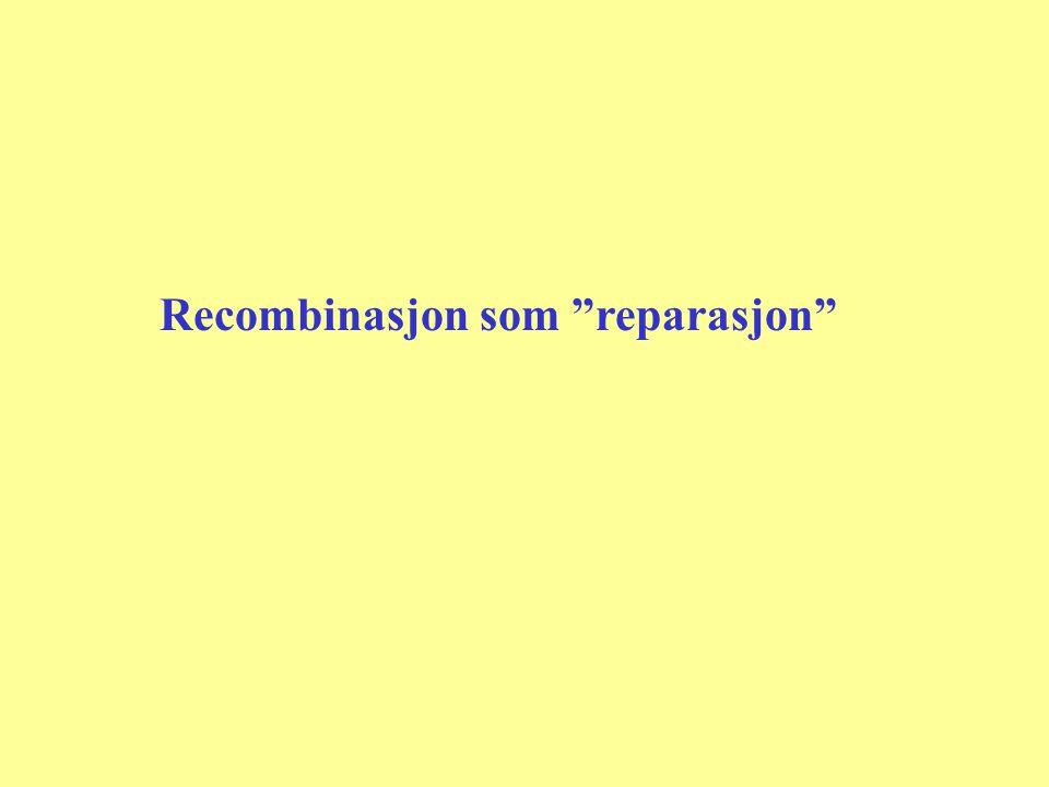 Recombinasjon som reparasjon