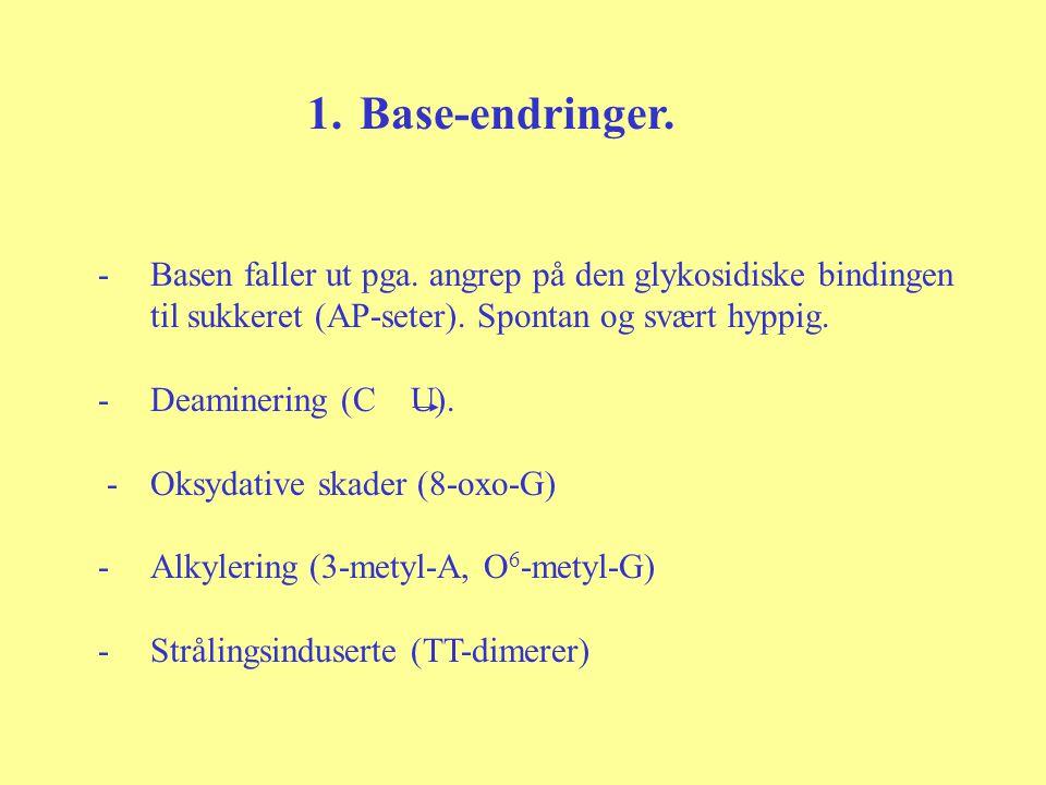 Base-endringer. Basen faller ut pga. angrep på den glykosidiske bindingen. til sukkeret (AP-seter). Spontan og svært hyppig.