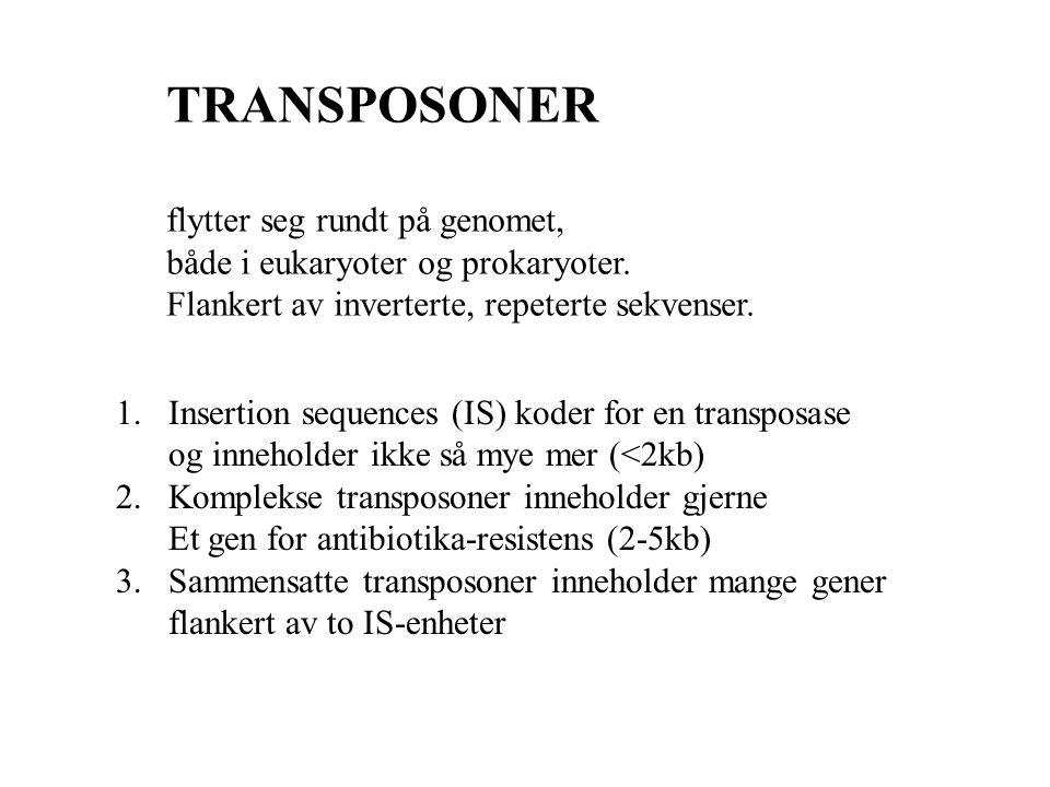 TRANSPOSONER flytter seg rundt på genomet,