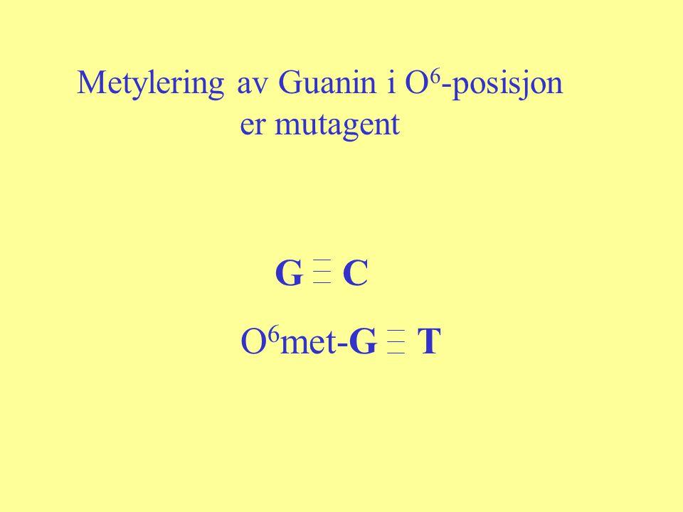 Metylering av Guanin i O6-posisjon