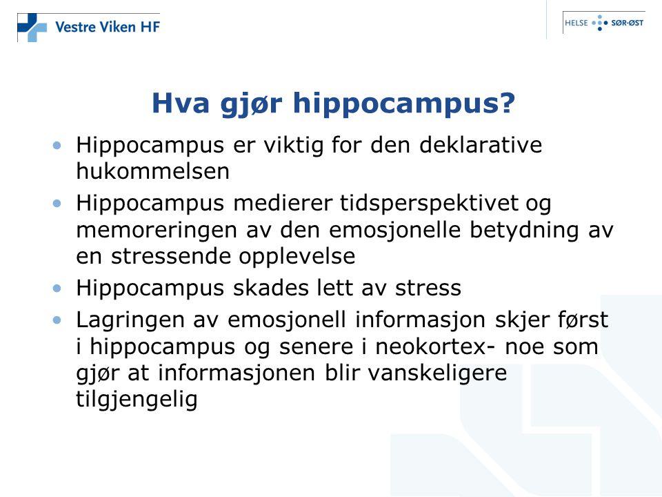 Hva gjør hippocampus Hippocampus er viktig for den deklarative hukommelsen.