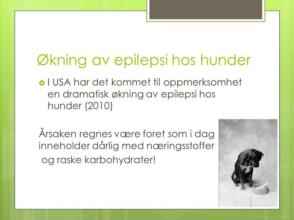 Økning av epilepsi hos hunder
