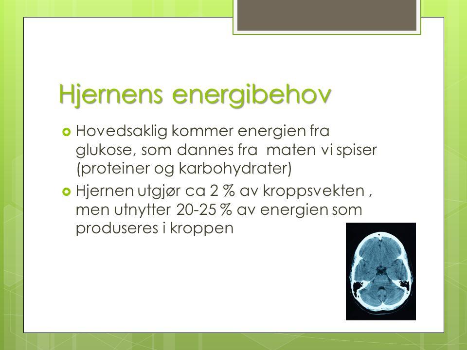 Hjernens energibehov Hovedsaklig kommer energien fra glukose, som dannes fra maten vi spiser (proteiner og karbohydrater)
