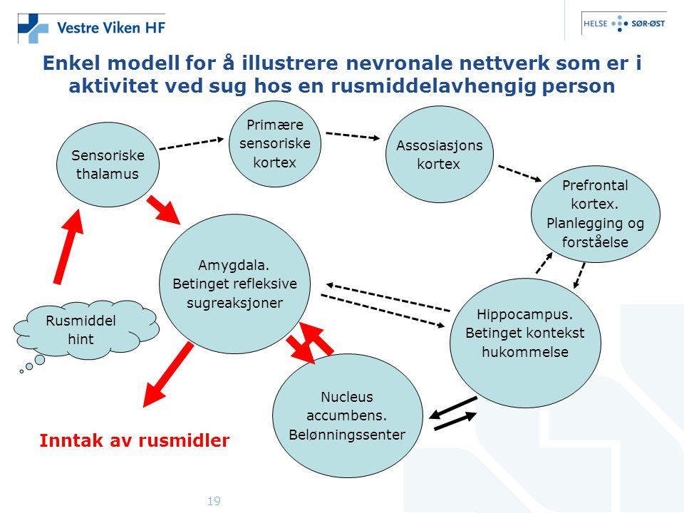 Enkel modell for å illustrere nevronale nettverk som er i aktivitet ved sug hos en rusmiddelavhengig person