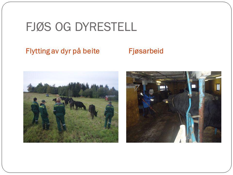 FJØS OG DYRESTELL Flytting av dyr på beite Fjøsarbeid