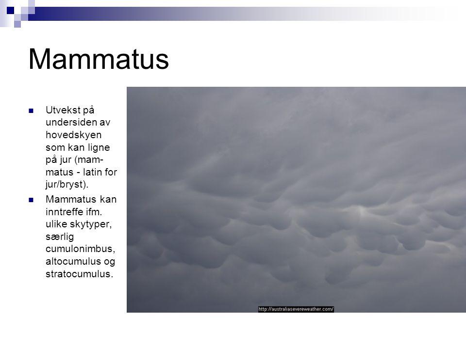 Mammatus Utvekst på undersiden av hovedskyen som kan ligne på jur (mam-matus - latin for jur/bryst).