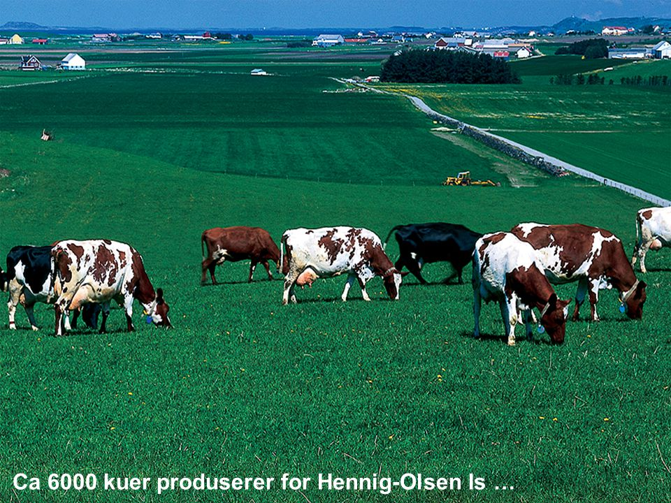Hennig- Olsen Is Ca 6000 kuer produserer for Hennig-Olsen Is …