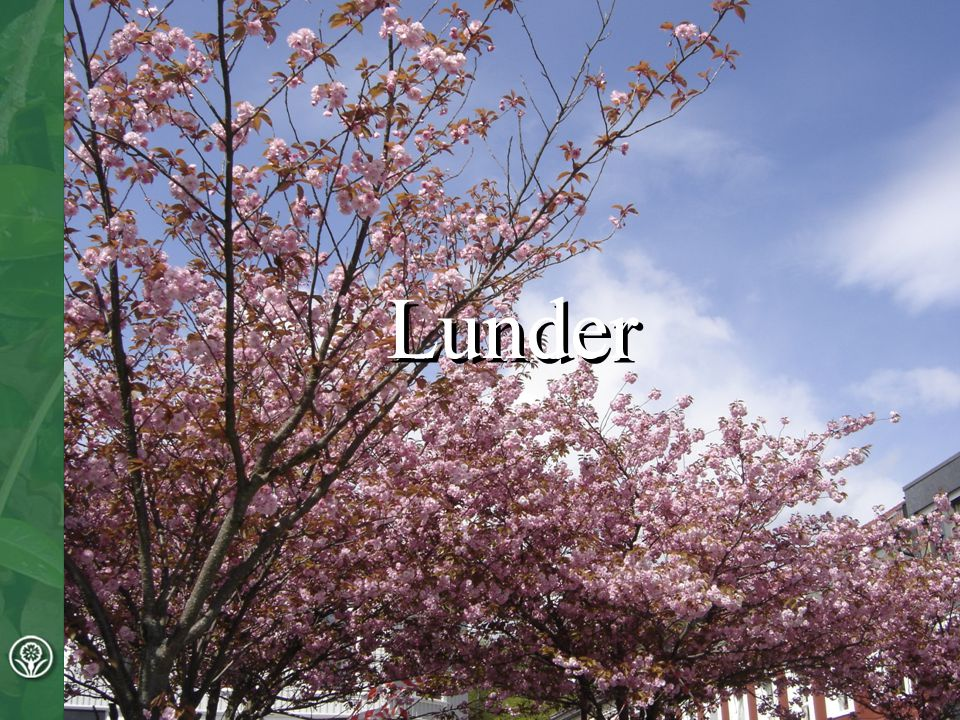 Lunder