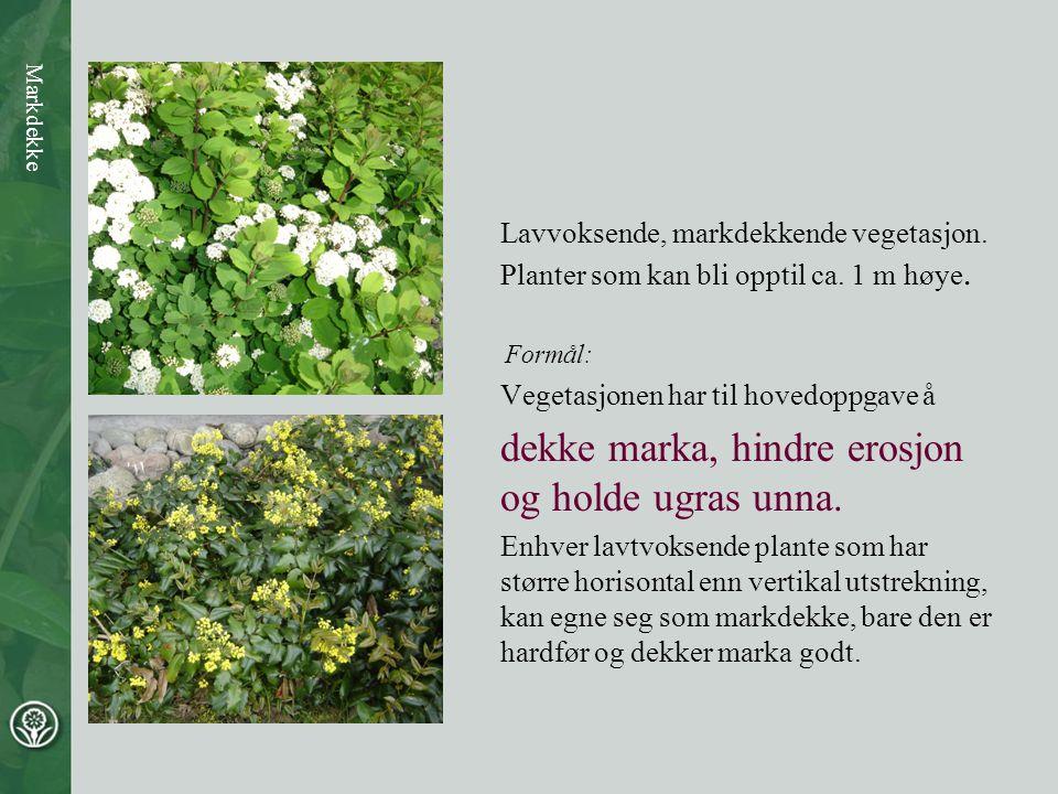 Lavvoksende, markdekkende vegetasjon. Planter som kan bli opptil ca