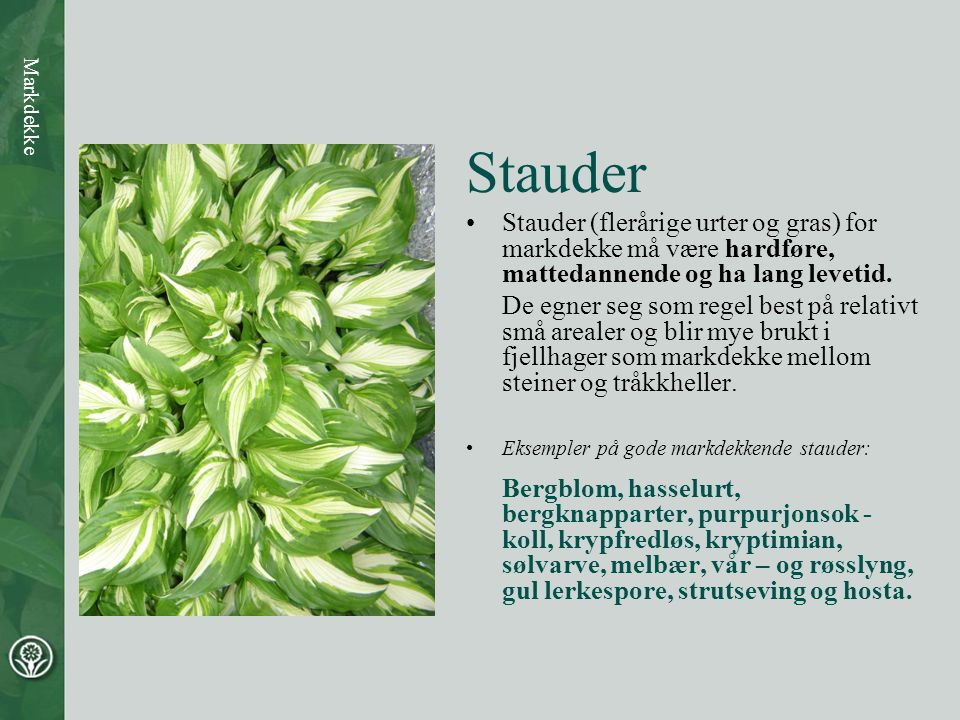 Stauder Stauder (flerårige urter og gras) for markdekke må være hardføre, mattedannende og ha lang levetid.