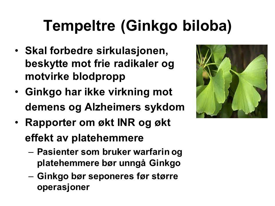 Tempeltre (Ginkgo biloba)