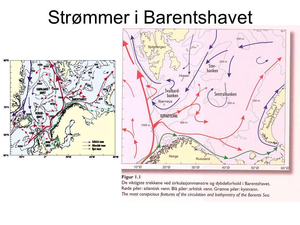 Strømmer i Barentshavet