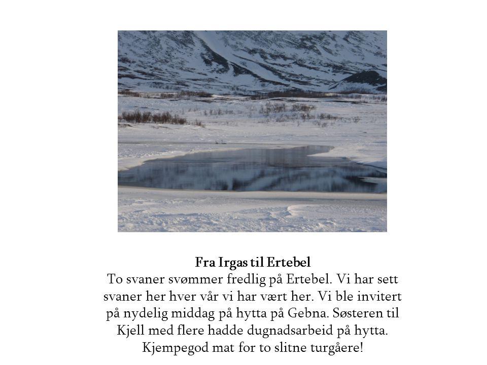 Fra Irgas til Ertebel To svaner svømmer fredlig på Ertebel