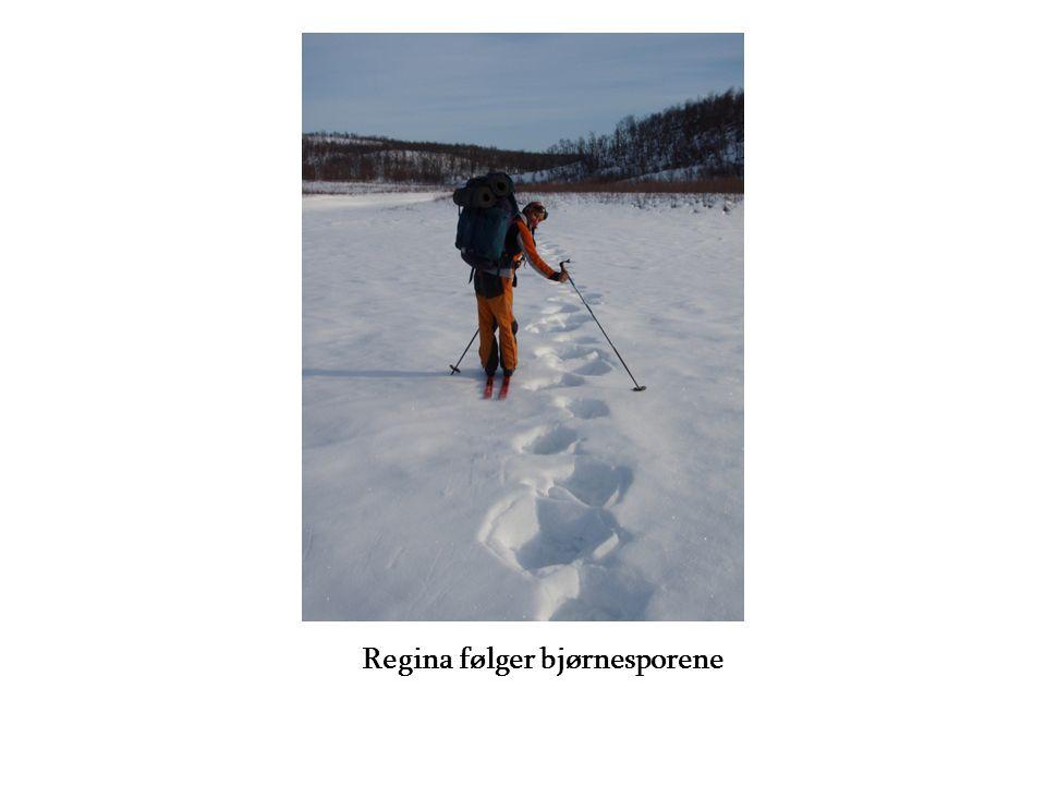 Regina følger bjørnesporene