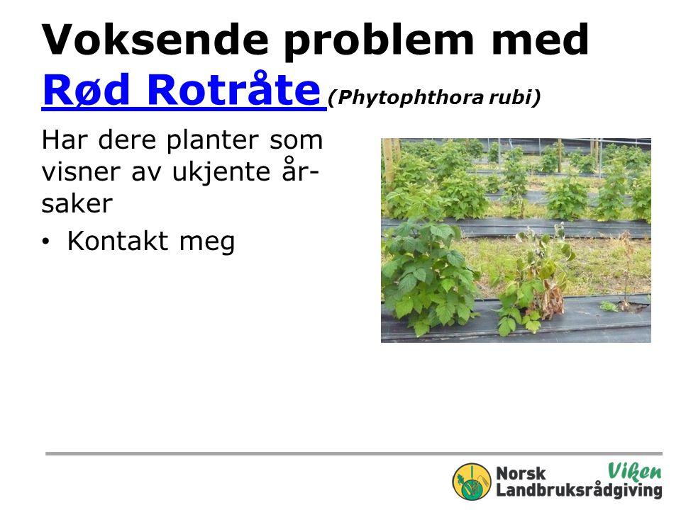 Voksende problem med Rød Rotråte (Phytophthora rubi)