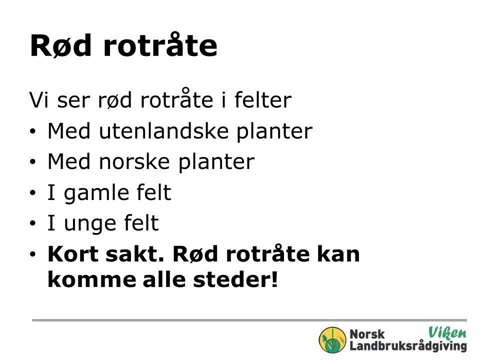 Rød rotråte Vi ser rød rotråte i felter Med utenlandske planter