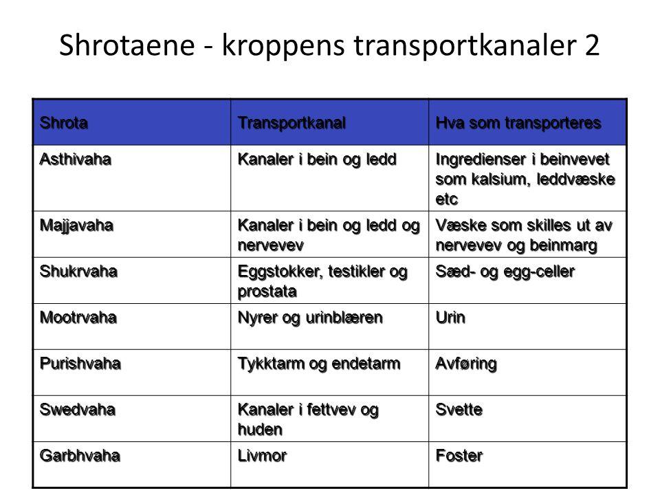 Shrotaene - kroppens transportkanaler 2