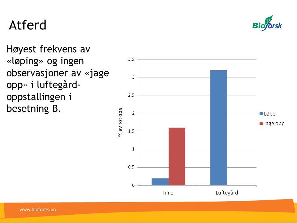 Atferd Høyest frekvens av «løping» og ingen observasjoner av «jage opp» i luftegård- oppstallingen i besetning B.