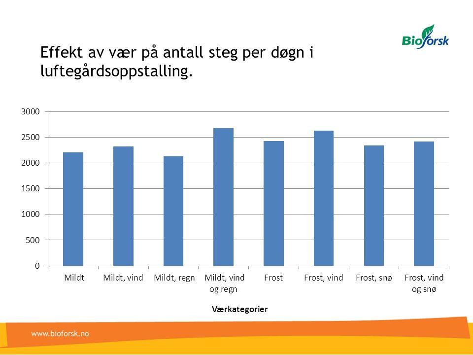 Effekt av vær på antall steg per døgn i luftegårdsoppstalling.