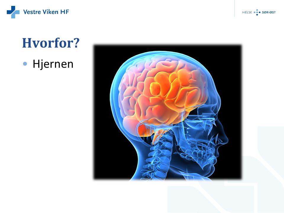 Hvorfor Hjernen