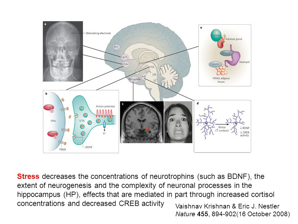 extent of neurogenesis and the complexity of neuronal processes in the
