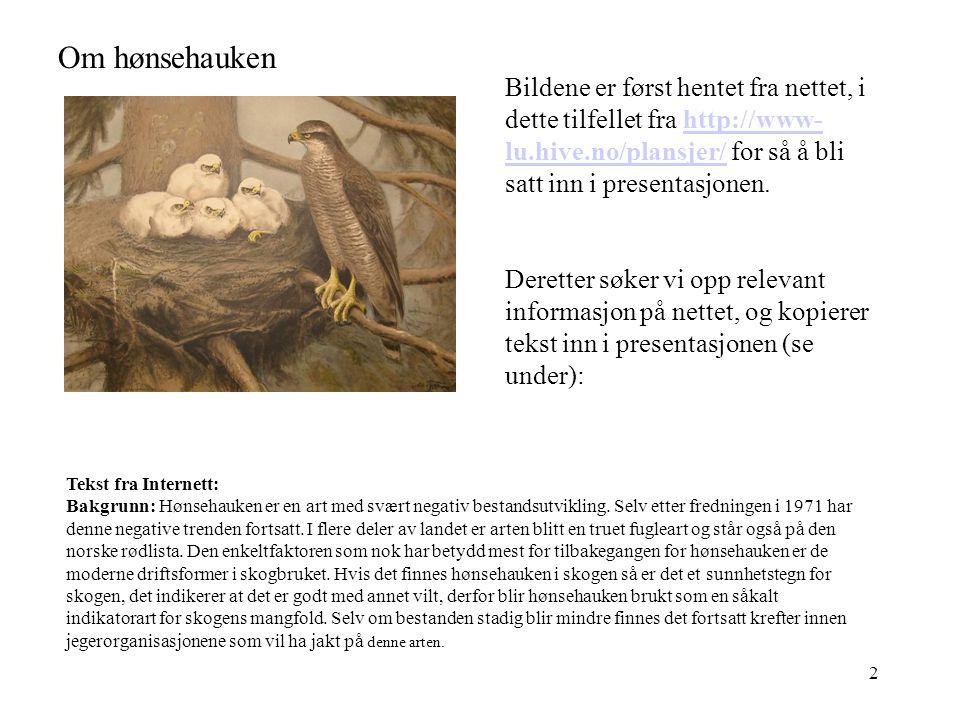 Om hønsehauken Bildene er først hentet fra nettet, i dette tilfellet fra http://www-lu.hive.no/plansjer/ for så å bli satt inn i presentasjonen.