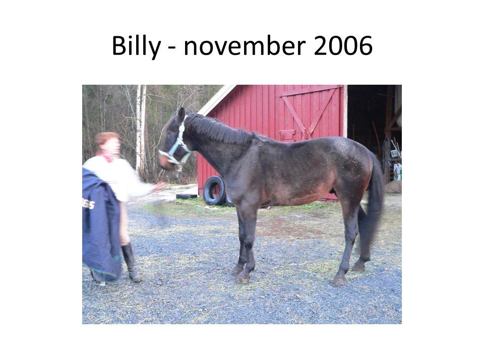 Billy - november 2006
