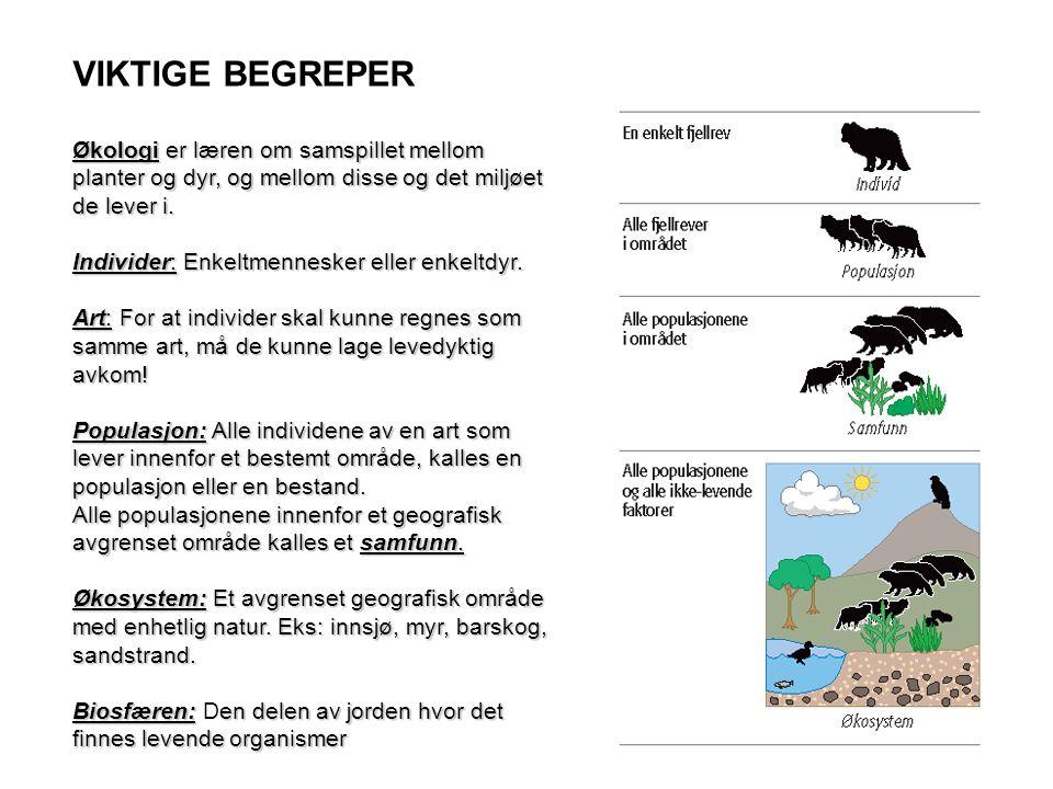 VIKTIGE BEGREPER Økologi er læren om samspillet mellom planter og dyr, og mellom disse og det miljøet de lever i.