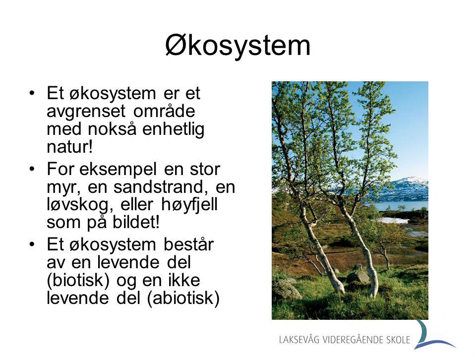 Økosystem Et økosystem er et avgrenset område med nokså enhetlig natur!