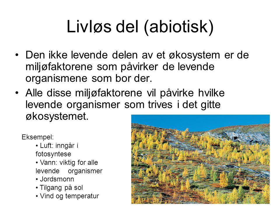 Livløs del (abiotisk) Den ikke levende delen av et økosystem er de miljøfaktorene som påvirker de levende organismene som bor der.