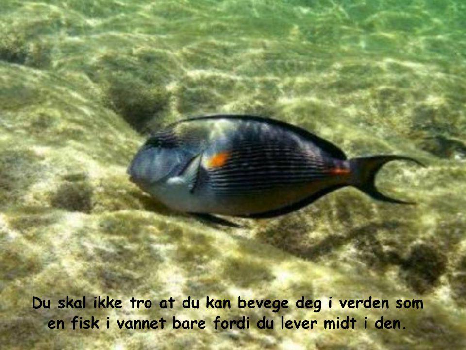 Du skal ikke tro at du kan bevege deg i verden som en fisk i vannet bare fordi du lever midt i den.