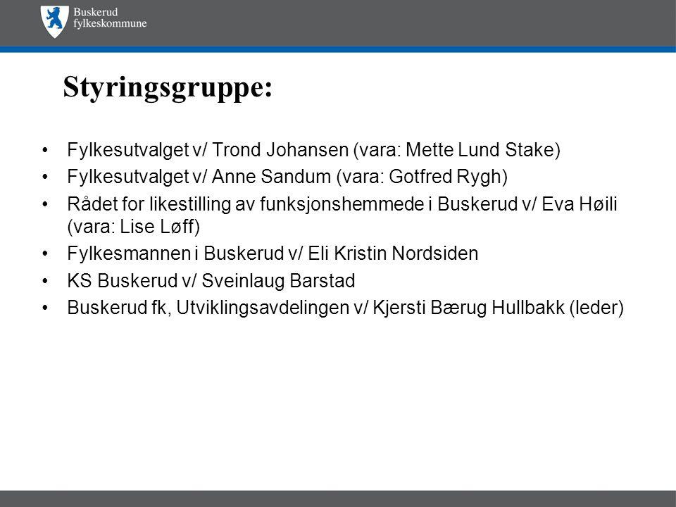Styringsgruppe: Fylkesutvalget v/ Trond Johansen (vara: Mette Lund Stake) Fylkesutvalget v/ Anne Sandum (vara: Gotfred Rygh)