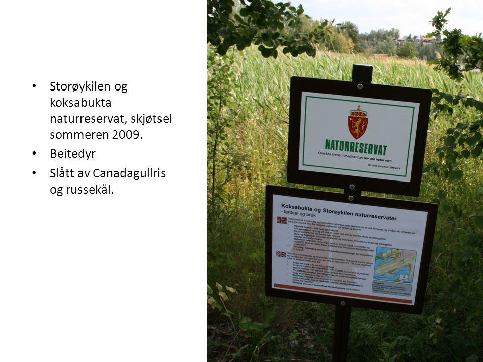 Storøykilen og koksabukta naturreservat, skjøtsel sommeren 2009.