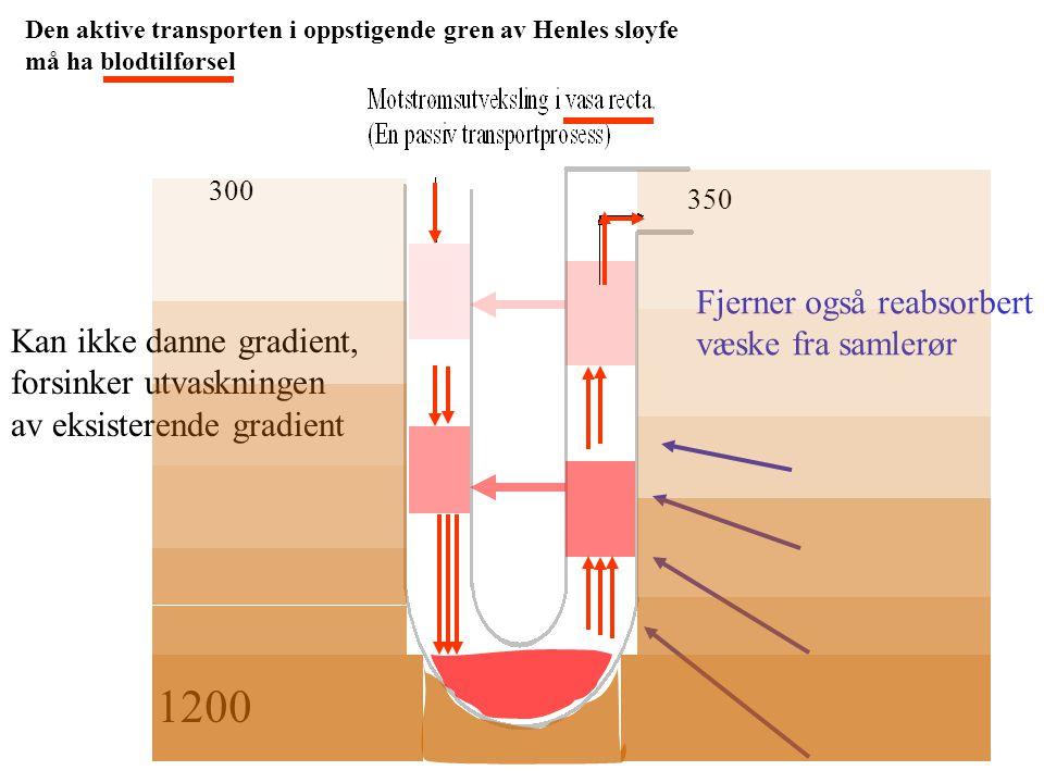 1200 Fjerner også reabsorbert væske fra samlerør