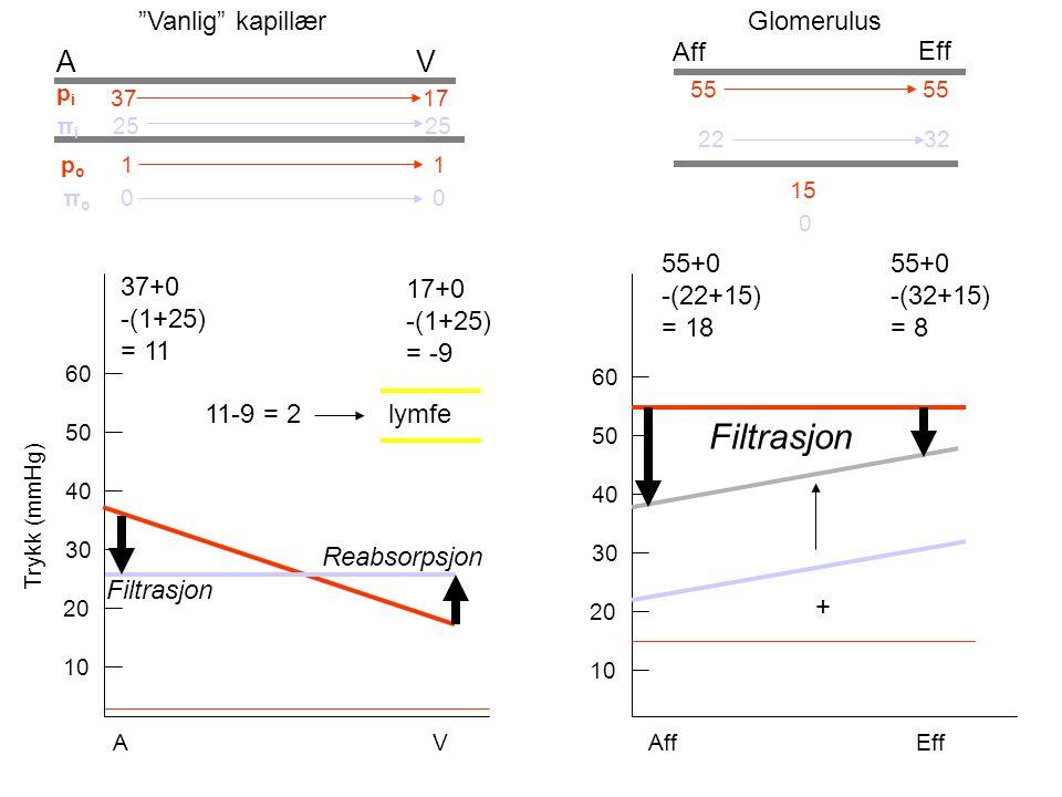 Filtrasjon A V Vanlig kapillær Glomerulus Aff Eff 55+0 -(22+15) = 18