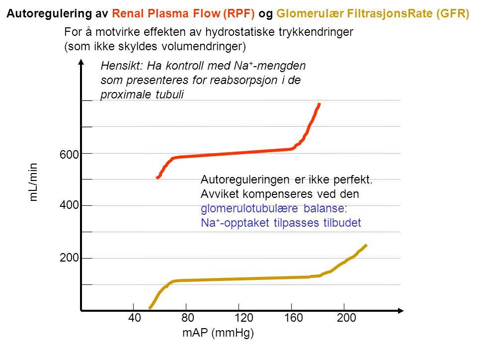 Autoregulering av Renal Plasma Flow (RPF) og Glomerulær FiltrasjonsRate (GFR)