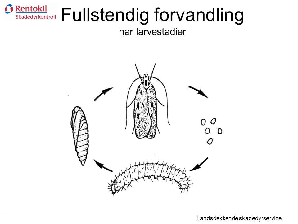 Fullstendig forvandling har larvestadier