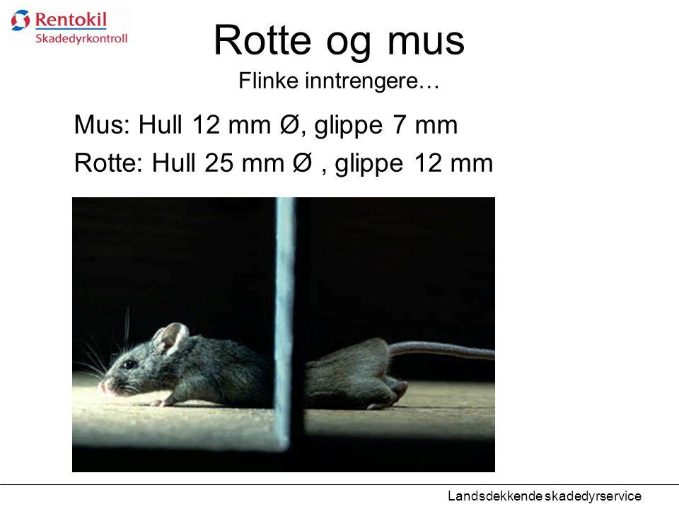 Rotte og mus Flinke inntrengere…