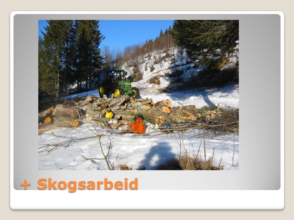 + Skogsarbeid