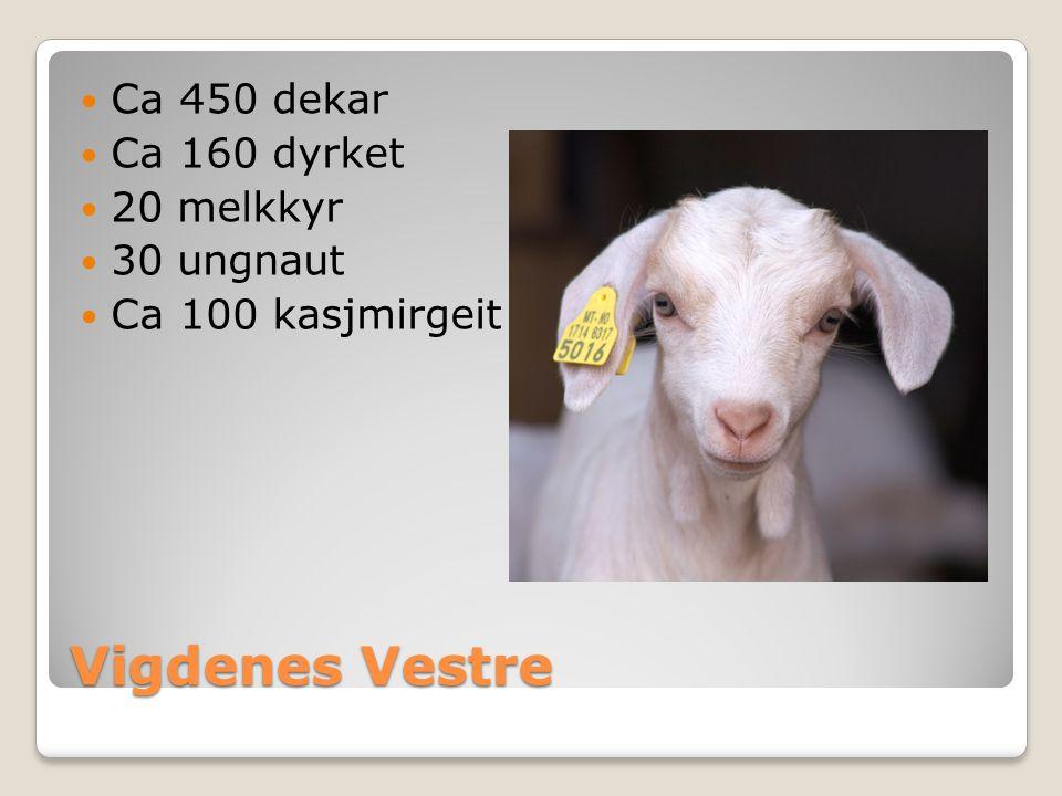 Vigdenes Vestre Ca 450 dekar Ca 160 dyrket 20 melkkyr 30 ungnaut