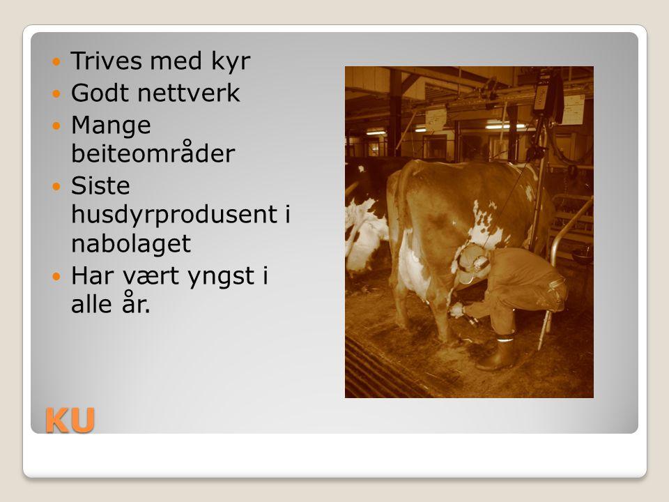KU Trives med kyr Godt nettverk Mange beiteområder