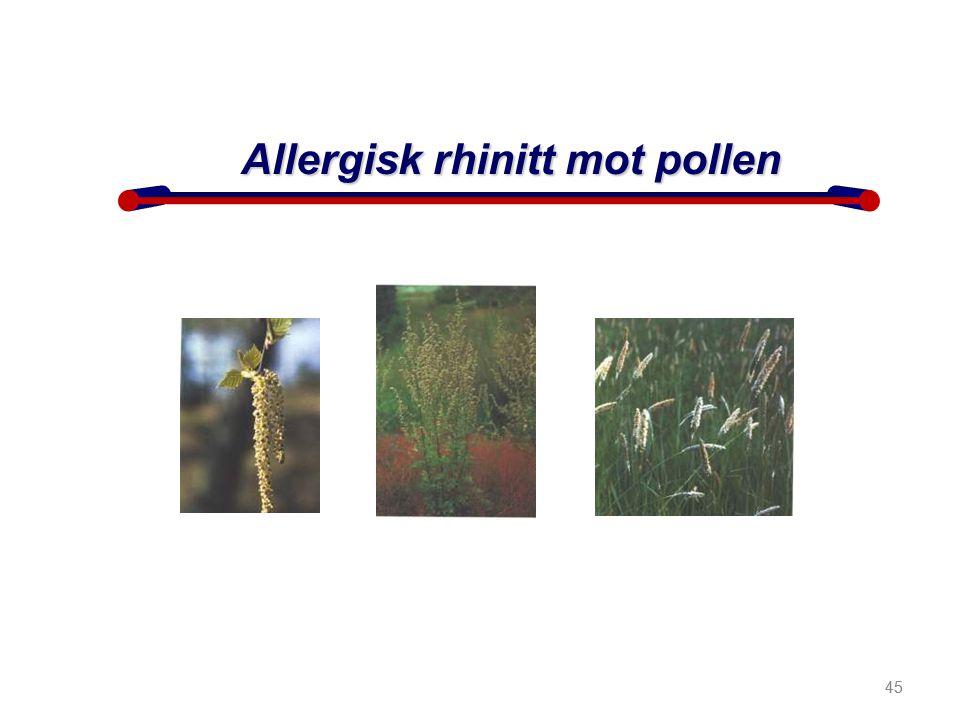 Allergisk rhinitt mot pollen