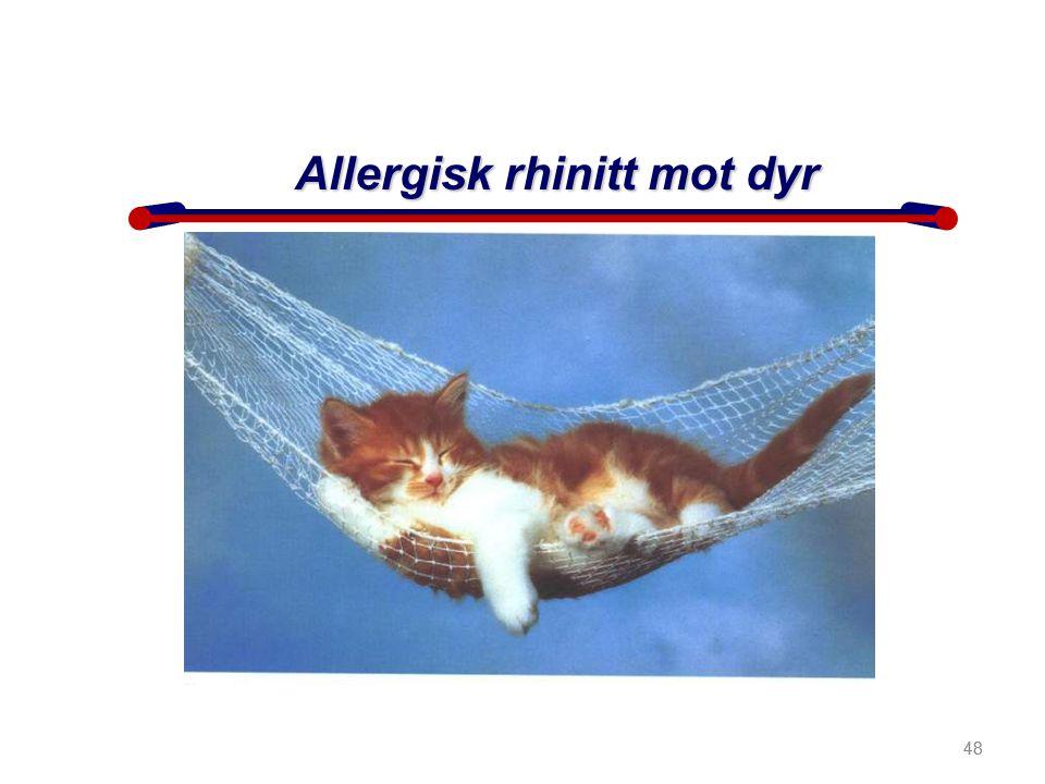 Allergisk rhinitt mot dyr