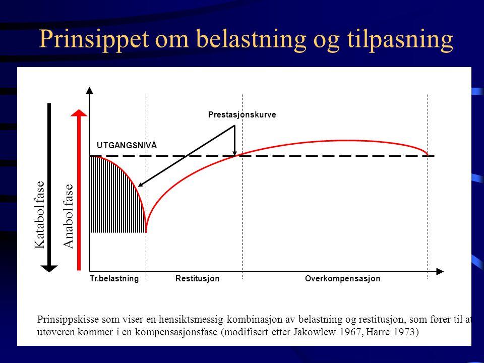 Prinsippet om belastning og tilpasning