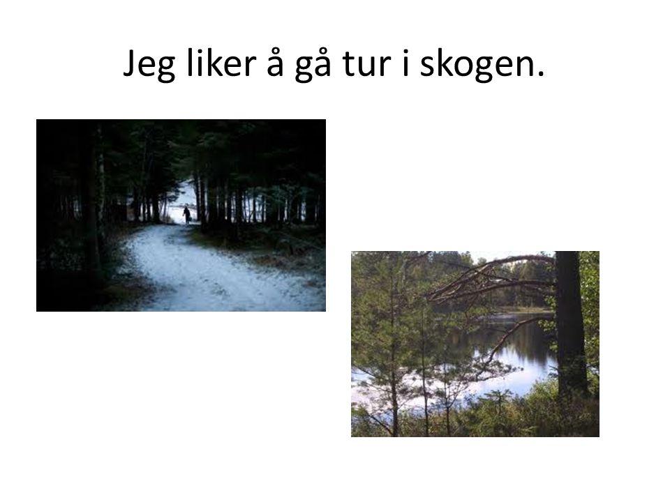 Jeg liker å gå tur i skogen.