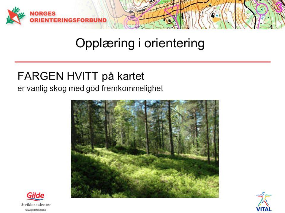 FARGEN HVITT på kartet er vanlig skog med god fremkommelighet