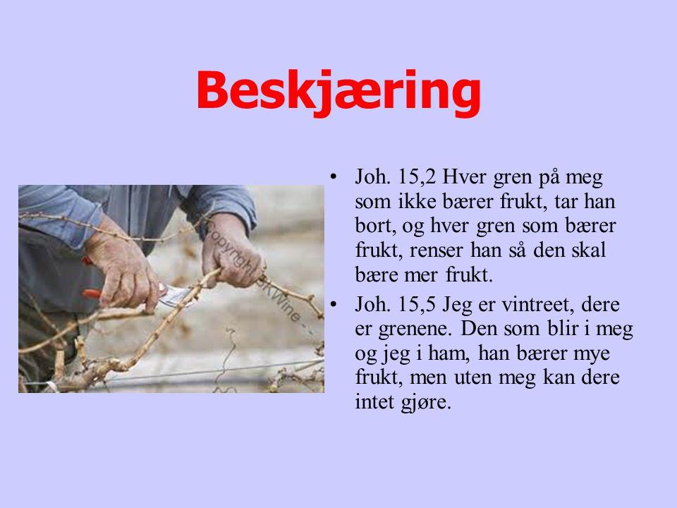 Beskjæring Joh. 15,2 Hver gren på meg som ikke bærer frukt, tar han bort, og hver gren som bærer frukt, renser han så den skal bære mer frukt.