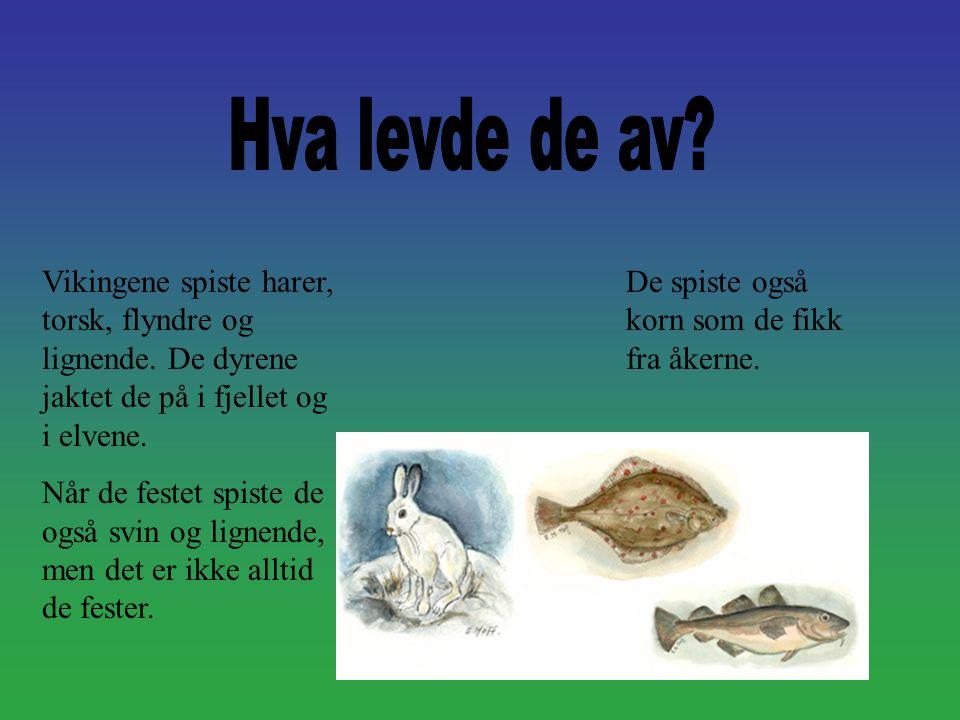 Hva levde de av Vikingene spiste harer, torsk, flyndre og lignende. De dyrene jaktet de på i fjellet og i elvene.