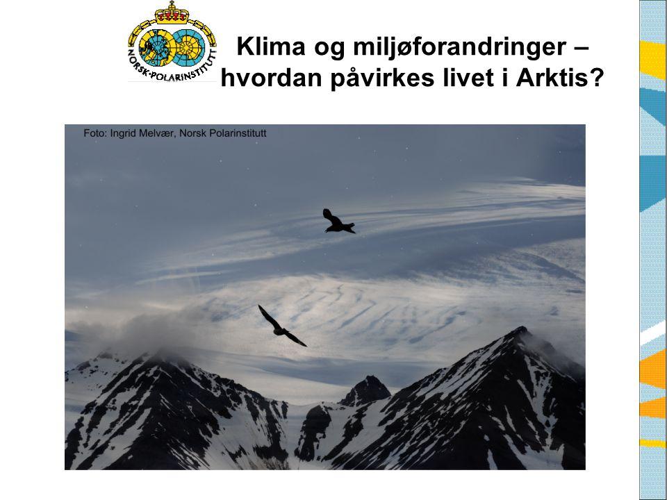 Klima og miljøforandringer – hvordan påvirkes livet i Arktis