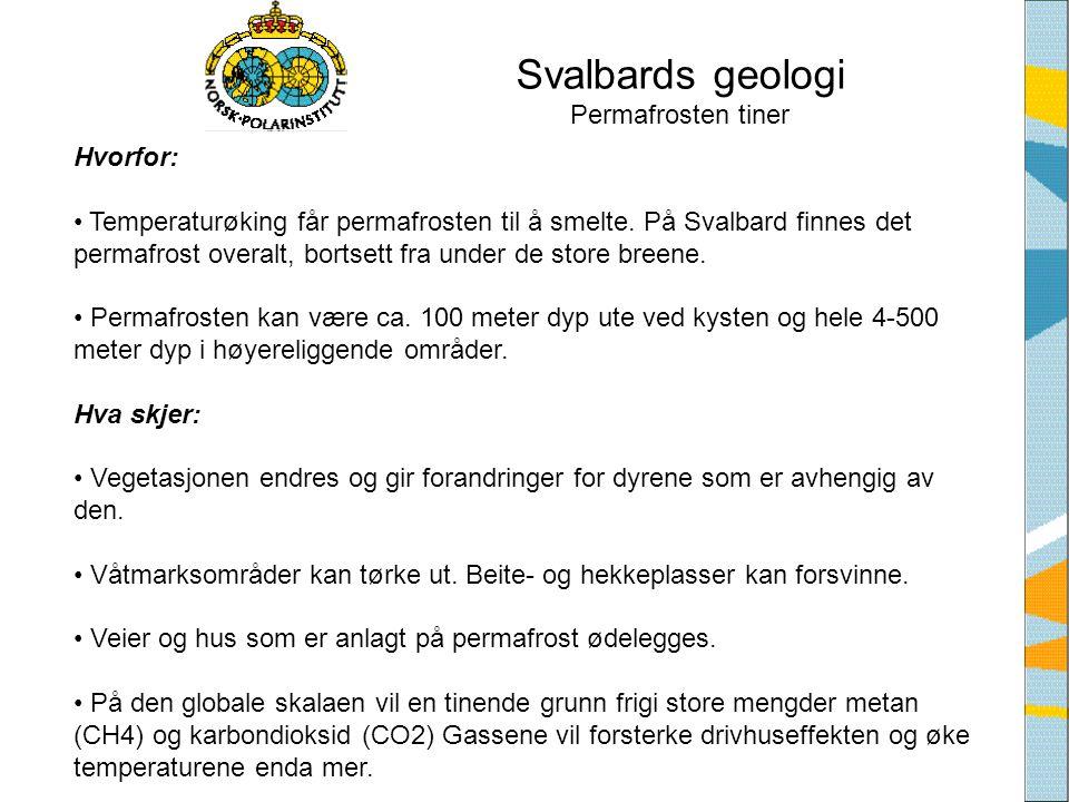 Svalbards geologi Permafrosten tiner